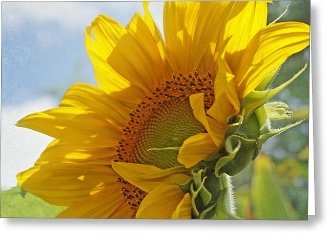 Yellow Sunflower Greeting Cards - Oh Happy Day Greeting Card by Kim Hojnacki