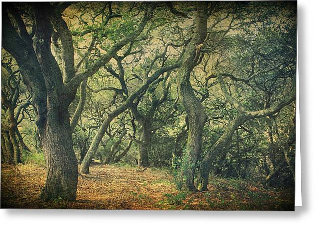 Oak Tree Greeting Cards - Oh How They Danced Greeting Card by Laurie Search