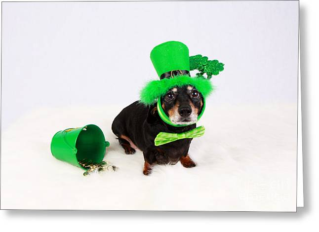 Lucky Dogs Greeting Cards - Oh Me Lucky Charms Greeting Card by Denise Oldridge