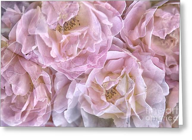 Any Greeting Cards - Oh So Delicate Rose Greeting Card by Theresa Tahara