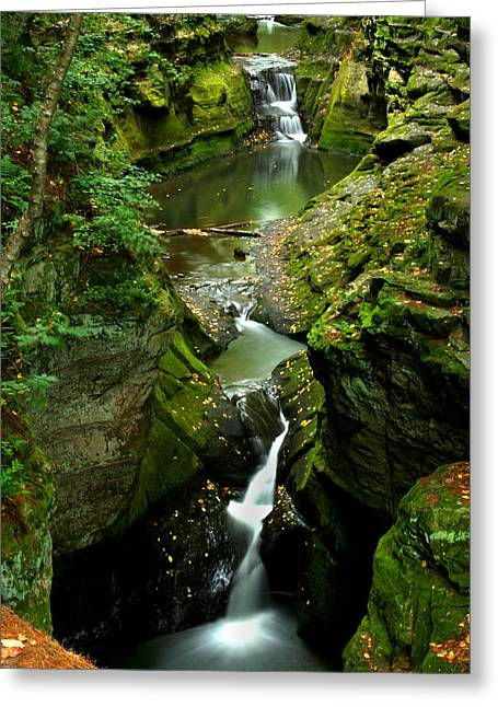 Babbling Greeting Cards - Oh So Green Greeting Card by Brook Burling