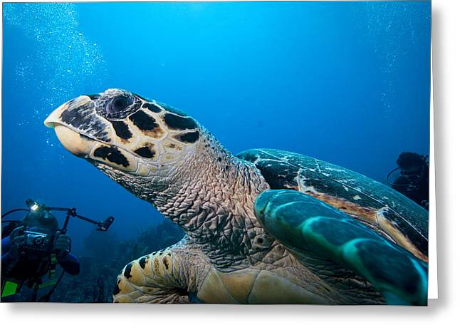 Scuba Diving Greeting Cards - Oh that Paparazzi  Greeting Card by Jean Noren