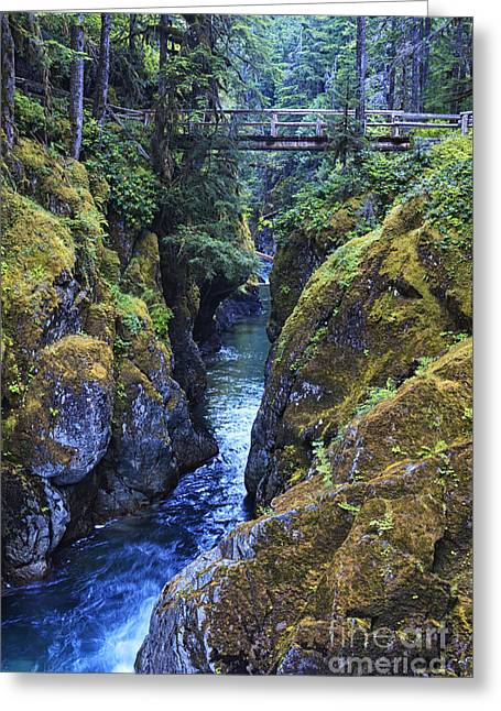 Beauty Mark Greeting Cards - Ohanapecosh River Greeting Card by Mark Kiver