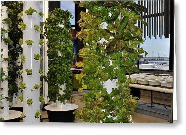 Broccoli Greeting Cards - OHare Airport Hydroponic Garden Greeting Card by Diane Lent