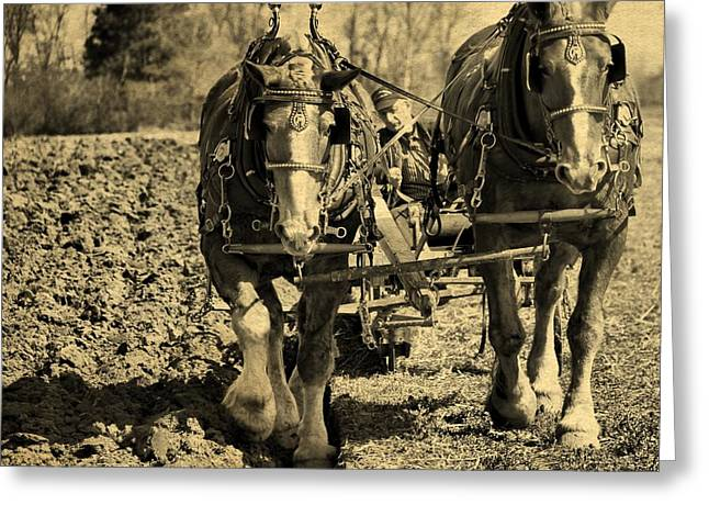 Sowing Greeting Cards - Ohio Farm Horses Greeting Card by Dan Sproul