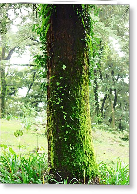 Oil Painting - A Moss Covered Beautiful Tree Greeting Card by Ashish Agarwal