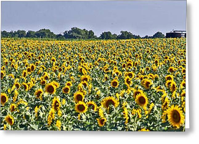 Sunflower Patch Greeting Cards - Oil Patch Greeting Card by Betty Morgan