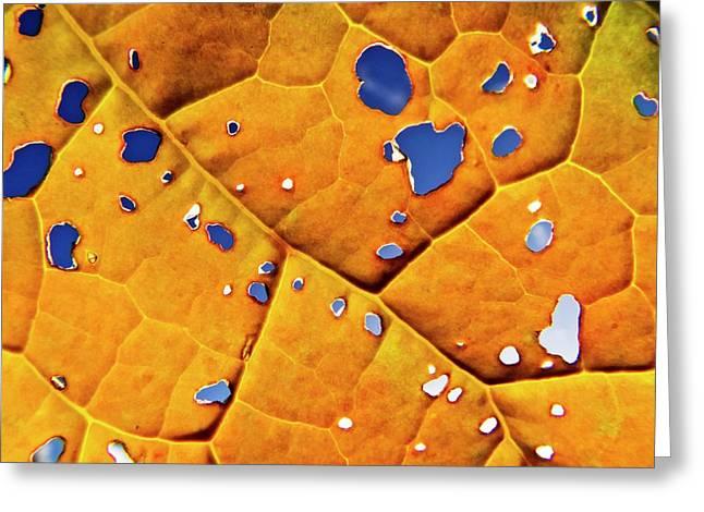 Oil Seed Rape Leaf (brassica Napus) Greeting Card by Ian Gowland