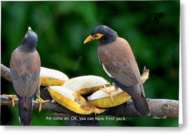 Pairs Greeting Cards - OK you can have first peck Greeting Card by Donald Rumsey
