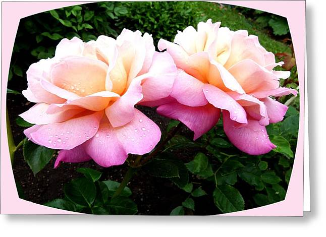 Okanagan Valley Greeting Cards - Okanagan Peace Roses Greeting Card by Will Borden