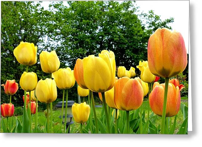 Okanagan Valley Greeting Cards - Okanagan Valley Tulips Greeting Card by Will Borden