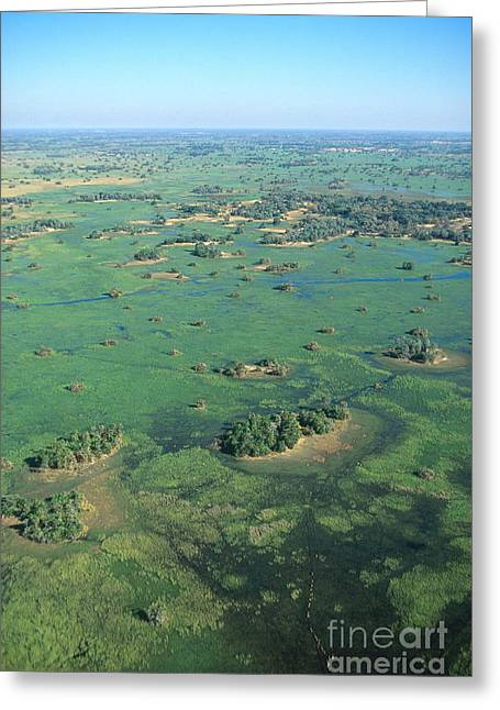 River Flooding Greeting Cards - Okavango Delta Greeting Card by Gregory G. Dimijian, M.D.