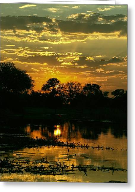 River Flooding Greeting Cards - Okavango Sunset Greeting Card by Amanda Stadther