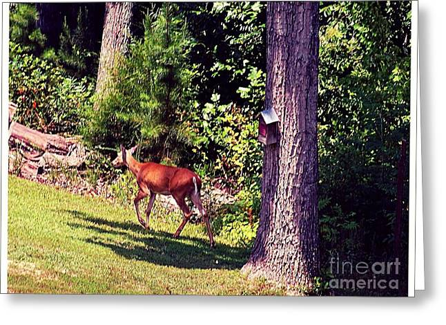 Next To Tree Greeting Cards - Morning Walk Through the Woods Greeting Card by Kimberlee  Baxter