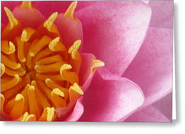 Okeefe Lily Blossom Greeting Card by Debbie Finley