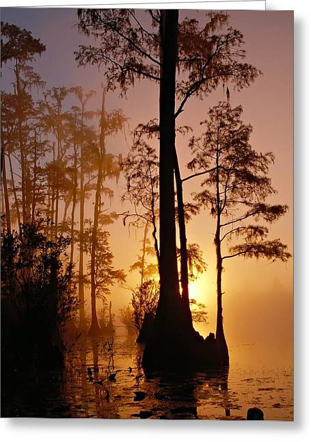 Florida Swamp Reflection Greeting Cards - Okefenokee Sunset Greeting Card by Mountain Dreams