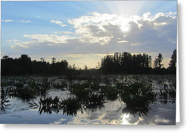 Lily Pads Greeting Cards - Okefenokee Swamp 11 Greeting Card by Cathy Lindsey