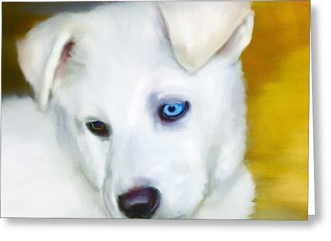 Husky Greeting Cards - Oko Plavo Greeting Card by Greg Collins