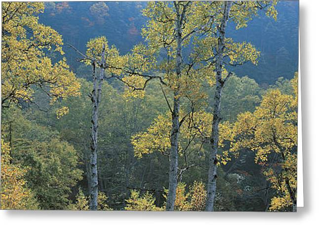 Hazy Days Greeting Cards - Okushiga Kogen Nagano Japan Greeting Card by Panoramic Images