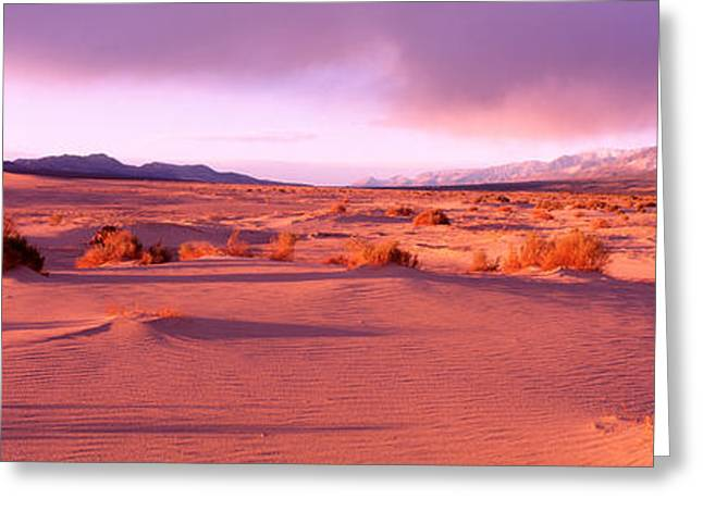 Sagebrush Greeting Cards - Olancha Sand Dunes, Olancha Greeting Card by Panoramic Images