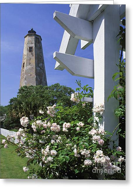 Cape Fear River Greeting Cards - Old Baldy - FM000078 Greeting Card by Daniel Dempster
