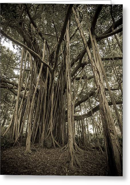 Black And White Nature Landscapes Greeting Cards - Old Banyan Tree Greeting Card by Adam Romanowicz