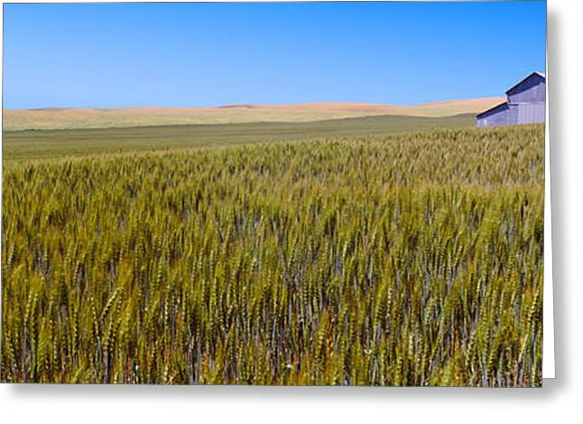 Old Barns Greeting Cards - Old Barn In A Field, Palouse County Greeting Card by Panoramic Images