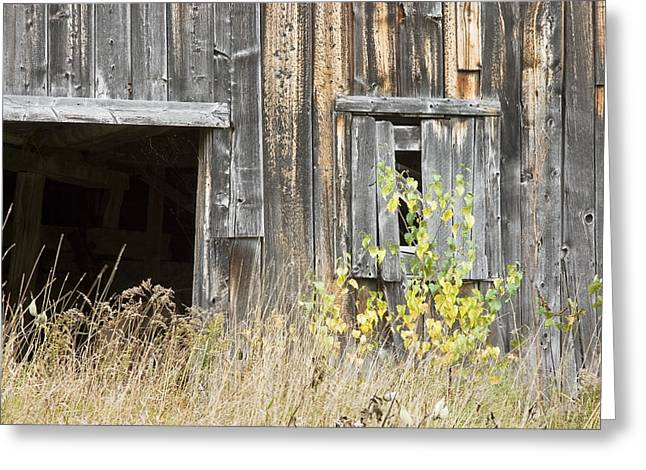Shack Greeting Cards - Old Barn in Fall Maine Greeting Card by Keith Webber Jr
