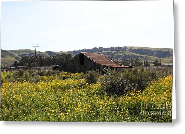 Sonoma Valley Greeting Cards - Old Barn in Sonoma California 5D22234 Greeting Card by Wingsdomain Art and Photography