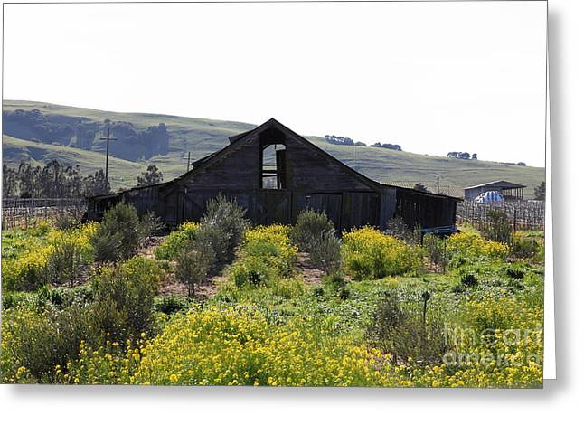 Sonoma Valley Greeting Cards - Old Barn in Sonoma California 5D22235 Greeting Card by Wingsdomain Art and Photography
