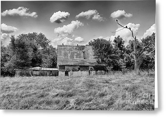 Old Barns Greeting Cards - Old Barn in the Field with Buzzards Greeting Card by Terri Morris