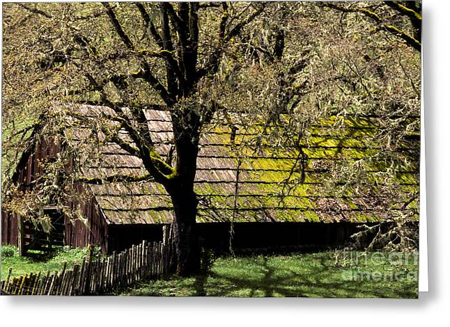 Old Barns Greeting Cards - Old Barn Greeting Card by Ron Sanford