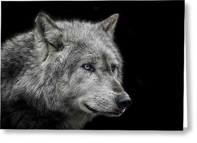 Wolves Greeting Cards - Old blue eyes Greeting Card by Paul Neville