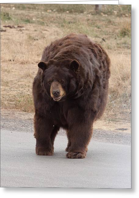 Brown Photographs Greeting Cards - Old brown bear Greeting Card by Robert  Torkomian