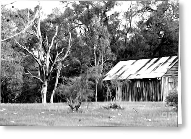Shed Digital Greeting Cards - Old Bush Shed Greeting Card by Phill Petrovic