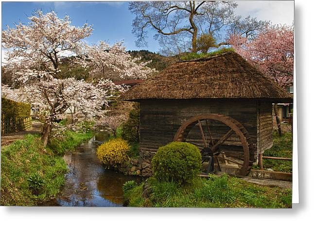 Water Mill Greeting Cards - Old Cherry Blossom Water Mill Greeting Card by Sebastian Musial