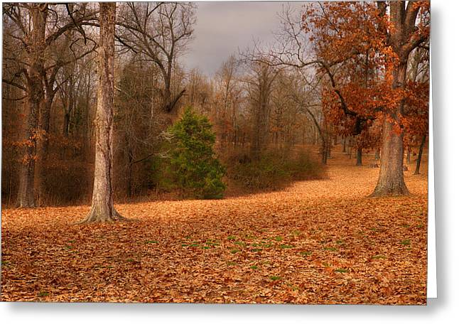 Walnut Tree Photograph Greeting Cards - Old Davidson Oaks Greeting Card by William Fields