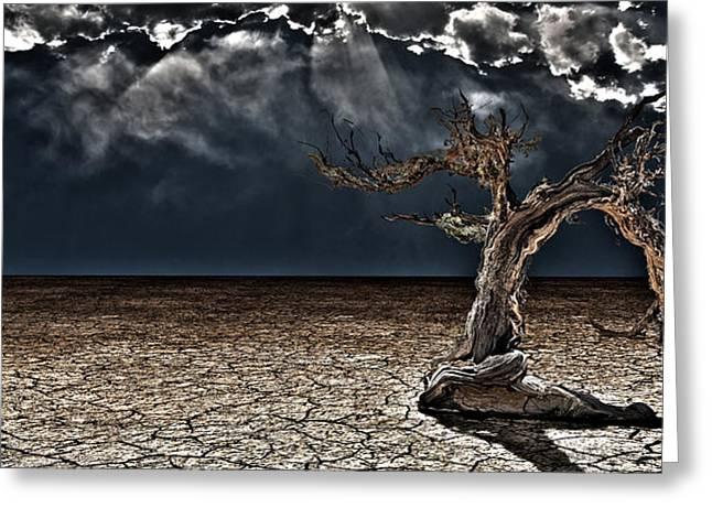 Arid Life Digital Art Greeting Cards - Old Desert Tree Greeting Card by Bruce Rolff