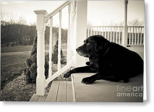 Waiting Photographs Greeting Cards - Old dog on a Front Porch Greeting Card by Diane Diederich