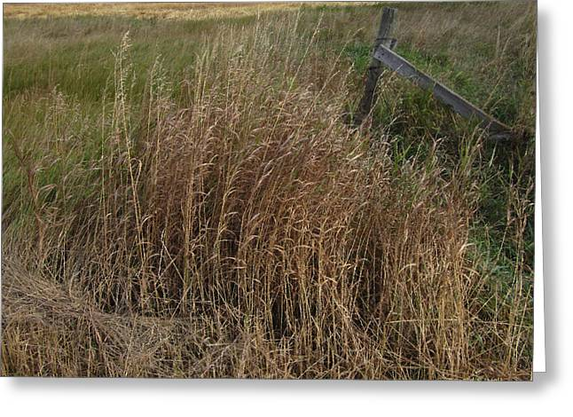 Old Fence Line Greeting Card by Donald S Hall