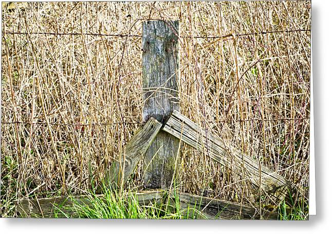 Border Photographs Greeting Cards - Old fence Greeting Card by Tom Gowanlock
