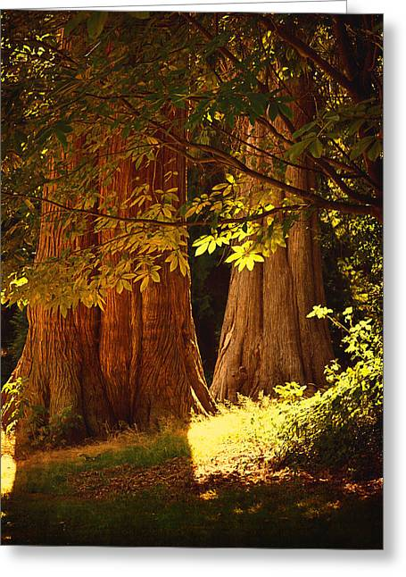 Stanley Park Greeting Cards - Old Forest Greeting Card by Maria Angelica Maira
