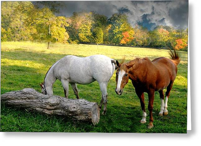 Brown Horse Photographs Greeting Cards - Old Friends Greeting Card by Diana Angstadt