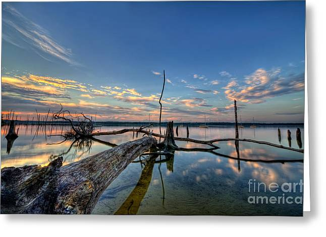 Manasquan Reservoir Greeting Cards - Old Friends Greeting Card by Michael Ver Sprill