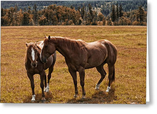 Quarter Horse Greeting Cards - Old Friends Greeting Card by Monte Arnold