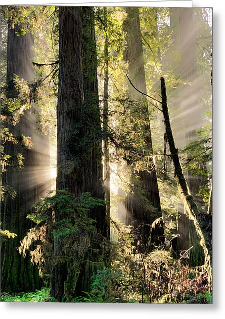 Old Growth Forest Light Greeting Card by Leland D Howard