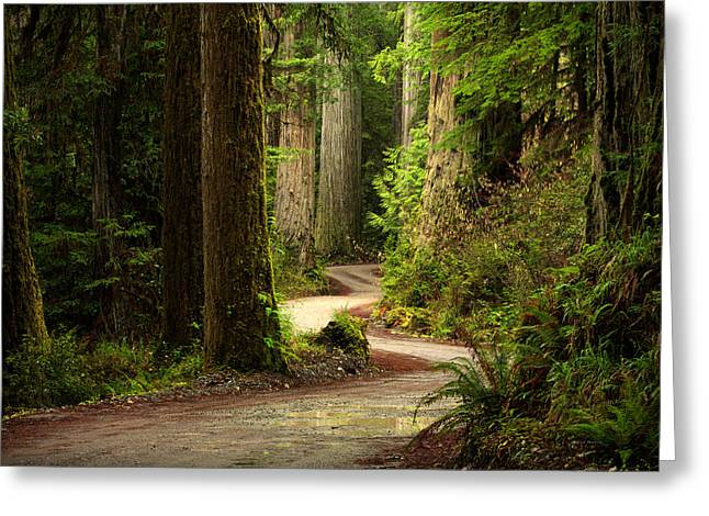 Old Growth Forest Route Greeting Card by Leland D Howard