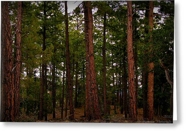 Prescott Greeting Cards - Old Growth Pines Greeting Card by Aaron Burrows