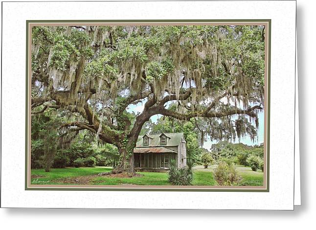 Matting Greeting Cards - Old House and Carolina Oak Greeting Card by Barry Monaco