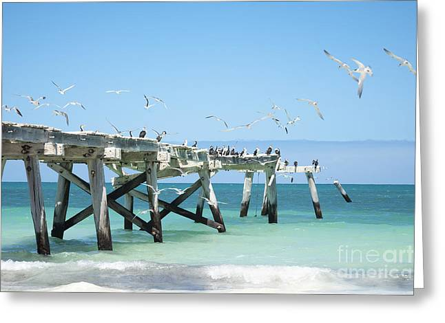 Tern Greeting Cards - Old Jetty at Eucla Western Australia Greeting Card by Colin and Linda McKie